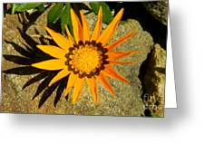 Orange Blossom Malaga Spain Greeting Card