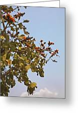 Orange Blossom Of Kesuda Blue Sky Greeting Card