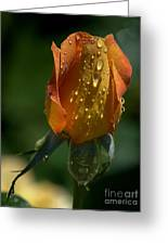 Orange Bud Greeting Card