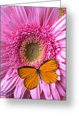 Orange Butterfly On Pink Daisy Greeting Card