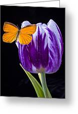 Orange Butterfly On Purple Tulip Greeting Card