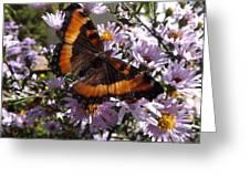 Orange Butterfly/purple Flowers Greeting Card