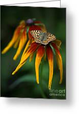 Orange Butterfly With Black Dots Sitting Onthe Red And Yellow Long Petaled Flowers Greeting Card
