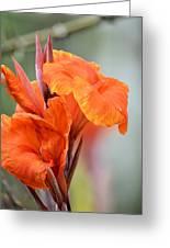 Orange Cana Greeting Card