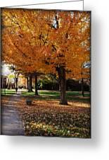 Orange Canopy - Davidson College Greeting Card