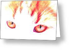 Orange Cat Eyes Greeting Card