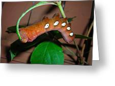 Orange Caterpillar Greeting Card