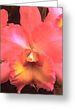 Orange Cattleya Orchid Greeting Card