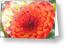 Orange Center Greeting Card