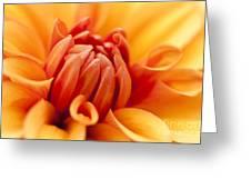 Orange Centre Greeting Card