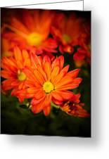 Orange Chrysanthemum Greeting Card
