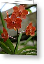 Orange Colored Orchid Greeting Card