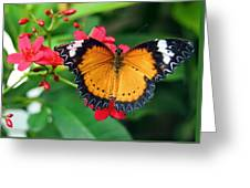 Orange Common Lacewing Butterfly Greeting Card