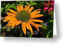 Orange Cone Flower Greeting Card