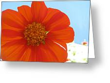 Orange Cosmo And Sky Greeting Card