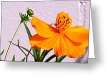 Neon Bright Orange Cosmos Greeting Card
