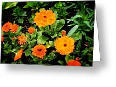 Orange Country Flowers - Series I Greeting Card