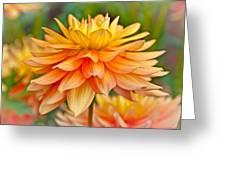 Orange Cream Dahlia Greeting Card