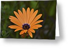 Orange Cream Greeting Card