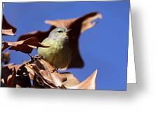 Orange-crowned Warbler - Feather Lite Greeting Card