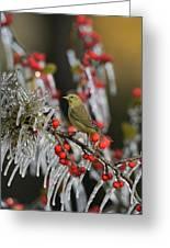 Orange-crowned Warbler (vermivora Celata Greeting Card