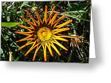 Orange Curl Greeting Card