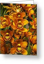 Orange Cymbidium Greeting Card