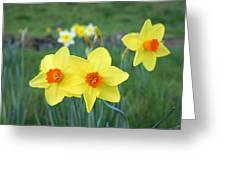 Orange Daffodils Flowers Spring Garden Greeting Card