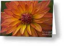 Orange Dahlia Blossom Greeting Card