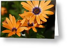 Orange Daisy Greeting Card