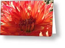 Orange Day Greeting Card