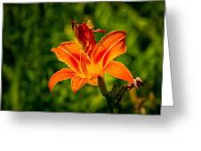 Orange Daylily Flower 3 Greeting Card