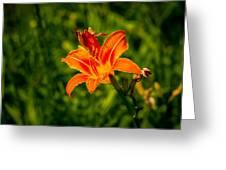 Orange Daylily Flower 4 Greeting Card