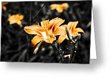 Orange Daylily Flowers On Gray 1 Greeting Card