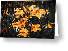 Orange Daylily Flowers On Gray 5 Greeting Card