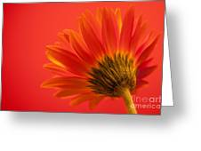 Orange Delight Greeting Card