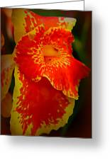 Orange Delight Greeting Card by Debra Forand