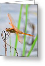 Orange Dragonfly On The Water's Edge Greeting Card