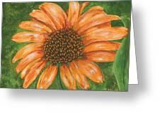 Orange Echinacea Greeting Card