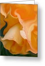 Orange Fantasy Begonia Flower Greeting Card