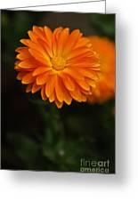 Orange Feathers Greeting Card