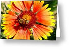 Orange Fiery Gaillardia Flower And Bee Macro Greeting Card