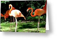 Orange Flamingo Greeting Card