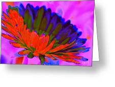 Orange Flower From Side Greeting Card