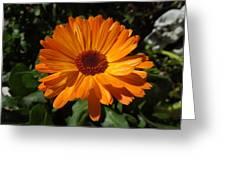 Orange Flower In The Garden Greeting Card
