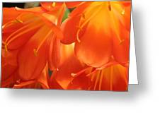 Orange Flower Petals Greeting Card