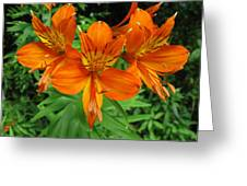 Orange Flowers Greeting Card