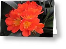Bright Orange Flowers Greeting Card