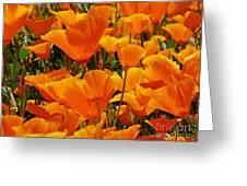 Orange Glimmer Greeting Card