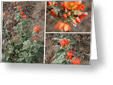 Orange Globe Mallow Collage Greeting Card